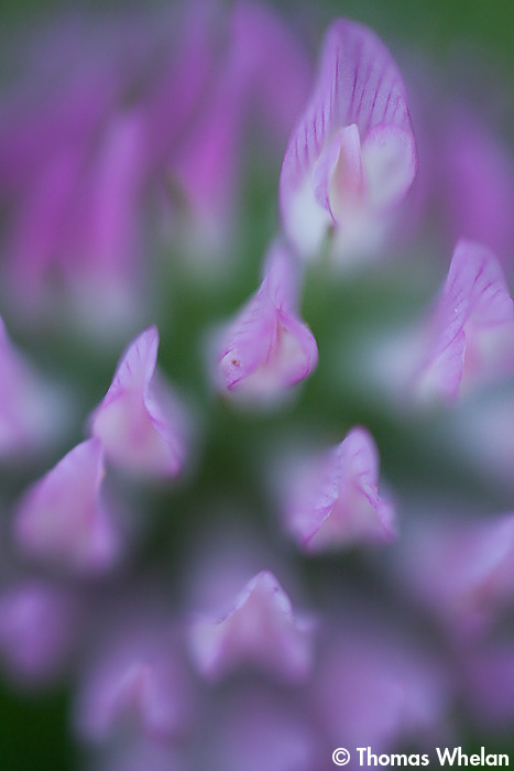 IMG_6092-1-2.clover