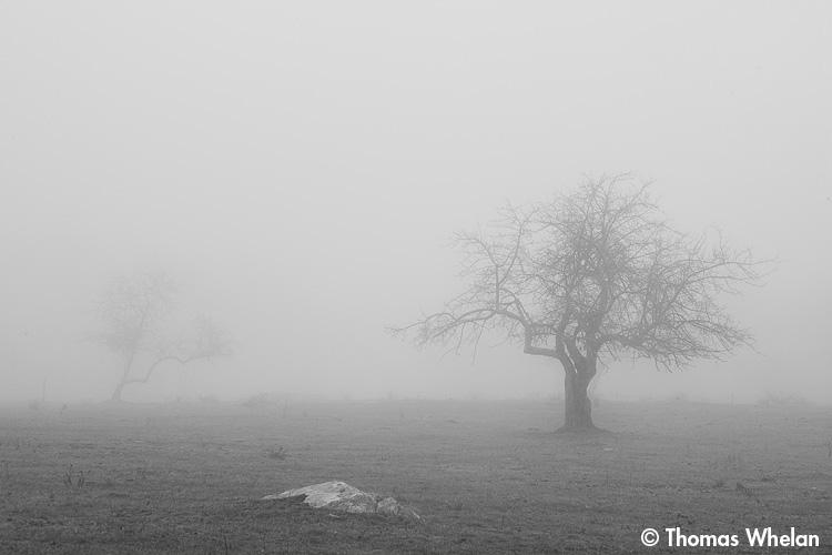 _MG_9724-trees