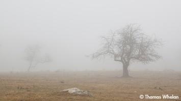 Foggy pasture