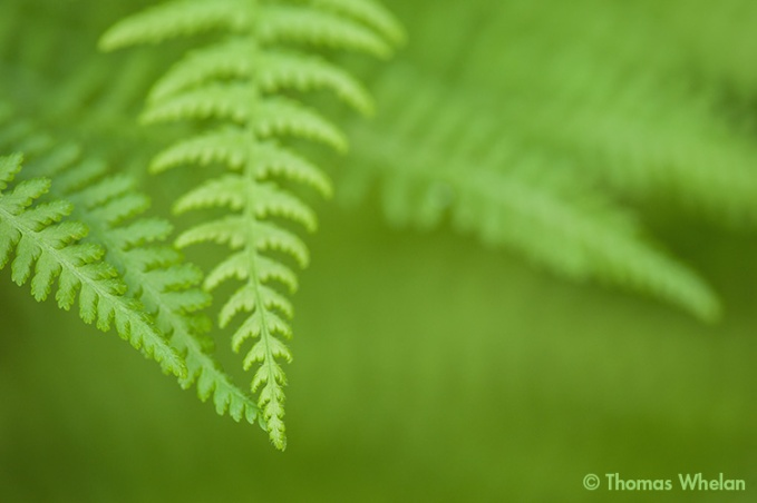1_MG_5449-2-fern-touch