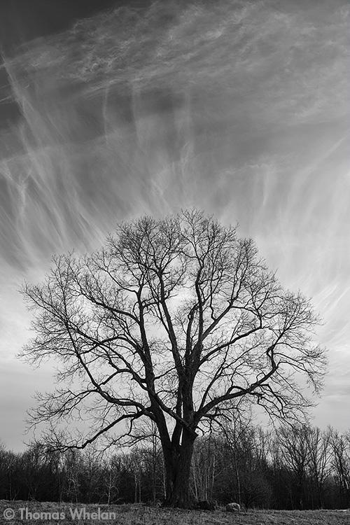 _MG_8328-lone-tree-bw-fa2