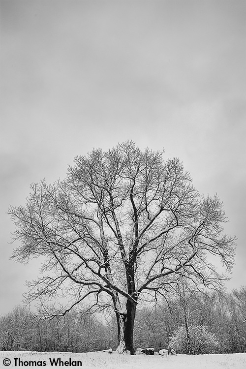 _MG_8594-2-snow-tree-fdh