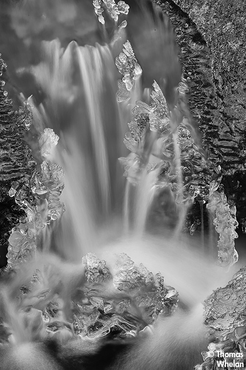 _MG_8653-water-bw