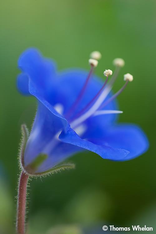_MG_9144-sonoran-blue