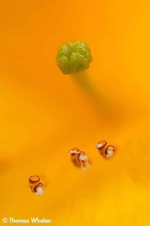 _MG_9437-yellow3