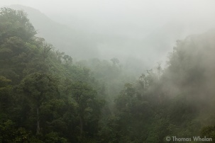 Rainforest mists