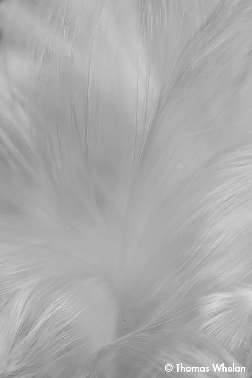 Milkweed Floss