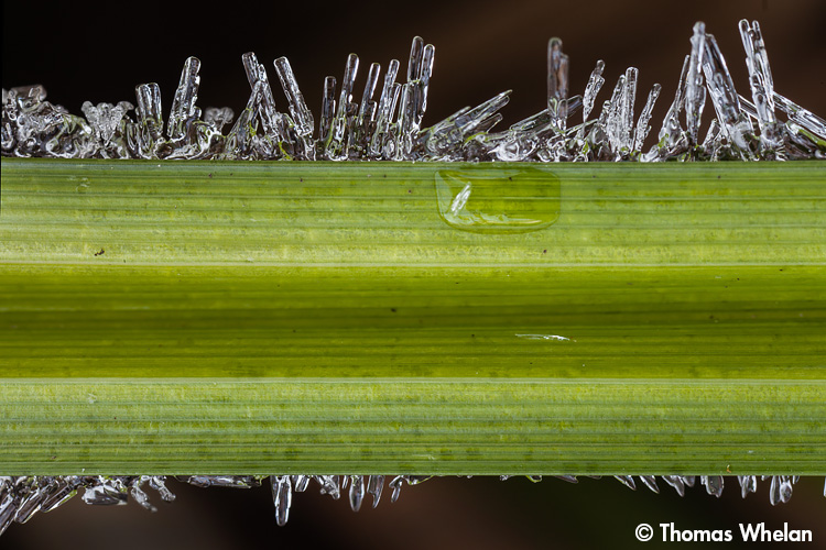_MG_3722-2-grass-frost
