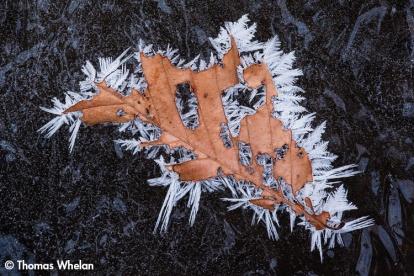 Leaf crystals