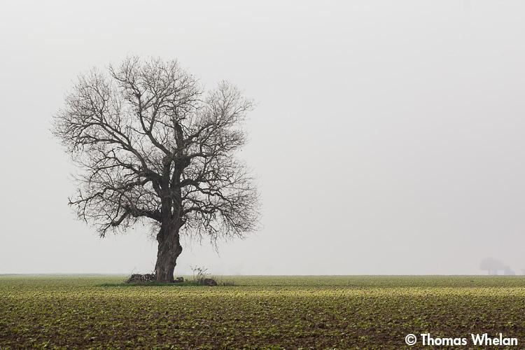_MG_4770-2-tree