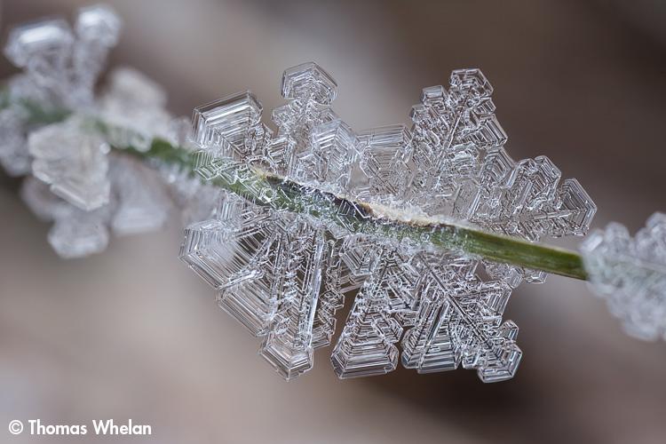 _MG_4583-crystal