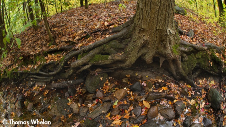 Roots and stream