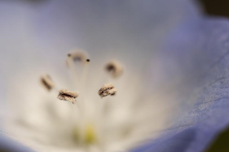 _MG_3627-geranium