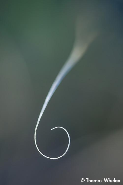 _mg_2785-2-curl2
