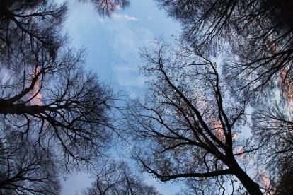 Linden path