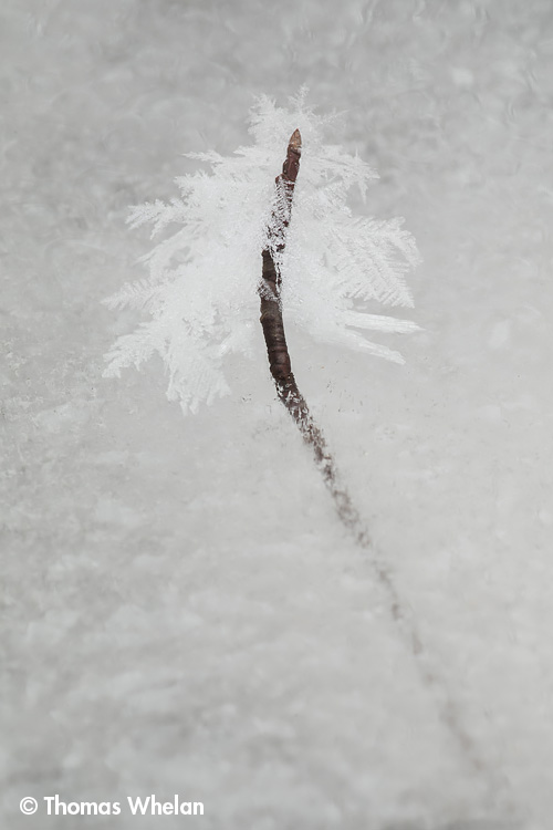 Crystals on twig