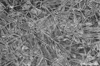 _55A2561-ice